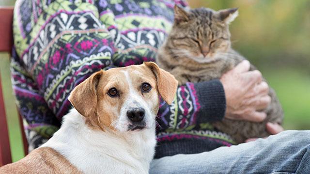 Senior Pets – We love them!