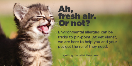 Environmental Allergies