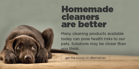 Alternatives to Toxic Cleaning Products