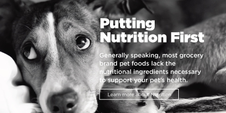Pet Nutrition Questions and Answers