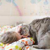 猫に好かれる方法