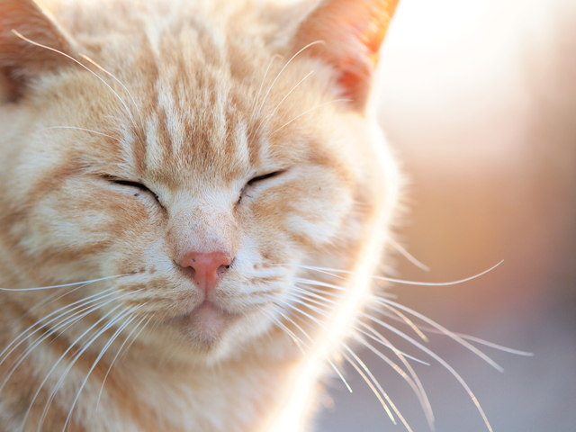 猫と仲良くなる方法