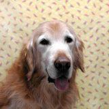 犬 認知症