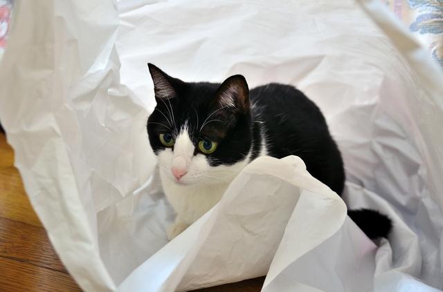 猫 洗濯ネット