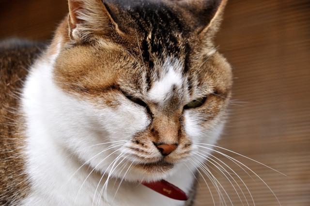 病院を嫌がる猫