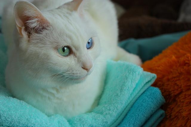 猫 タオル 落ち着く