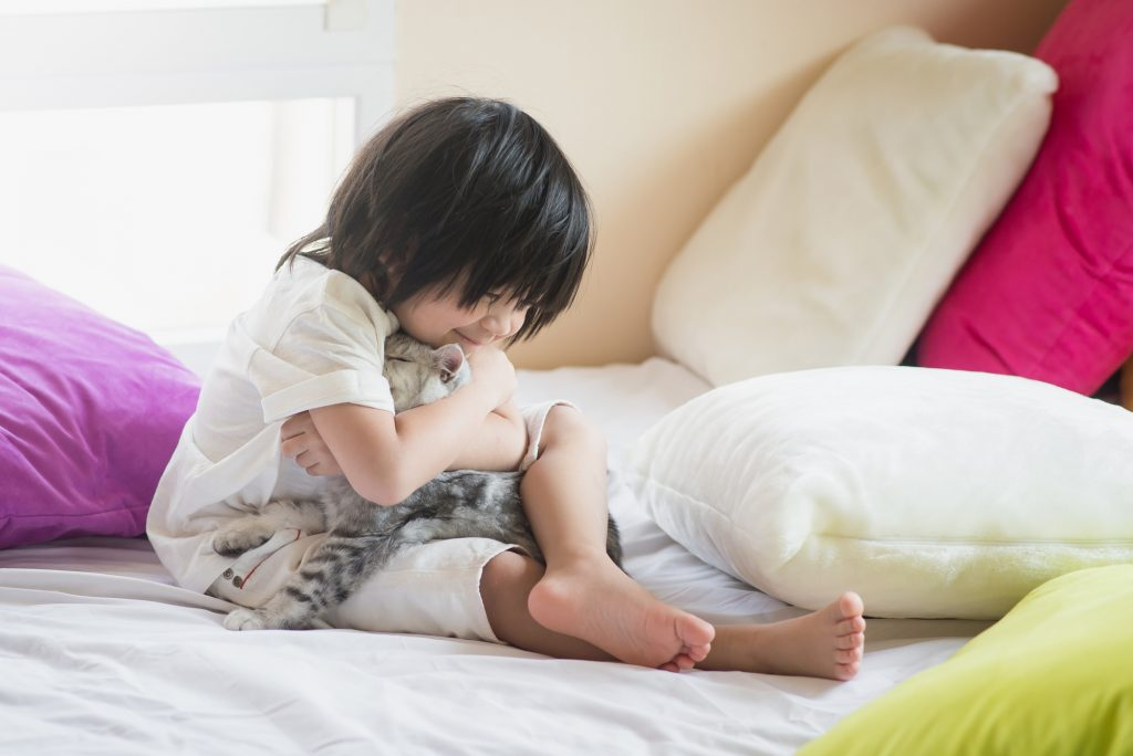 Asian baby playing with American Shorthair  kitten