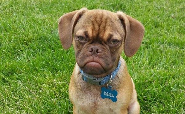 Earl-The-Grumpy-Puppy-1