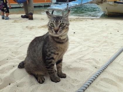 kabira_cat_0837