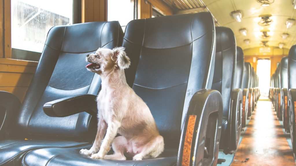 Dog on train vintage style