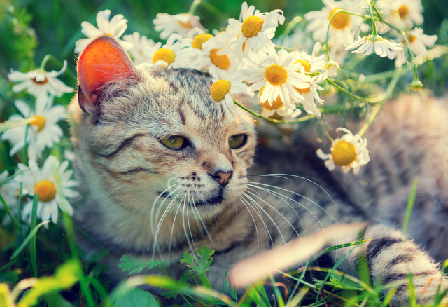 Cat with flowers relaxing on the grass in garden