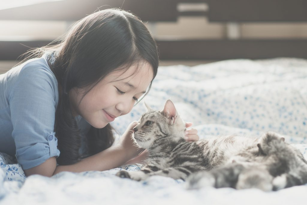 asian girl playing with american short hair cat