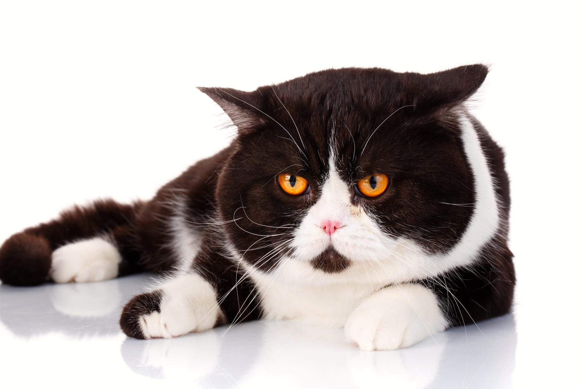 猫 生活習慣病
