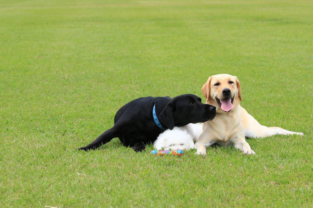 犬 いじめ 多頭飼い