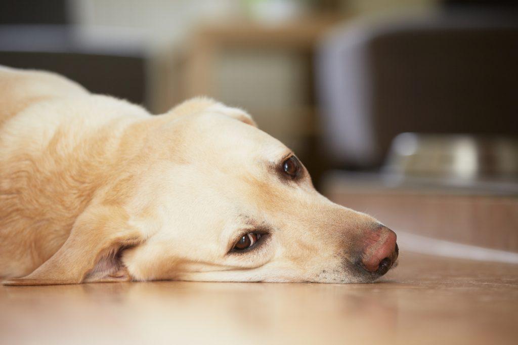 犬 ストレス いじめ