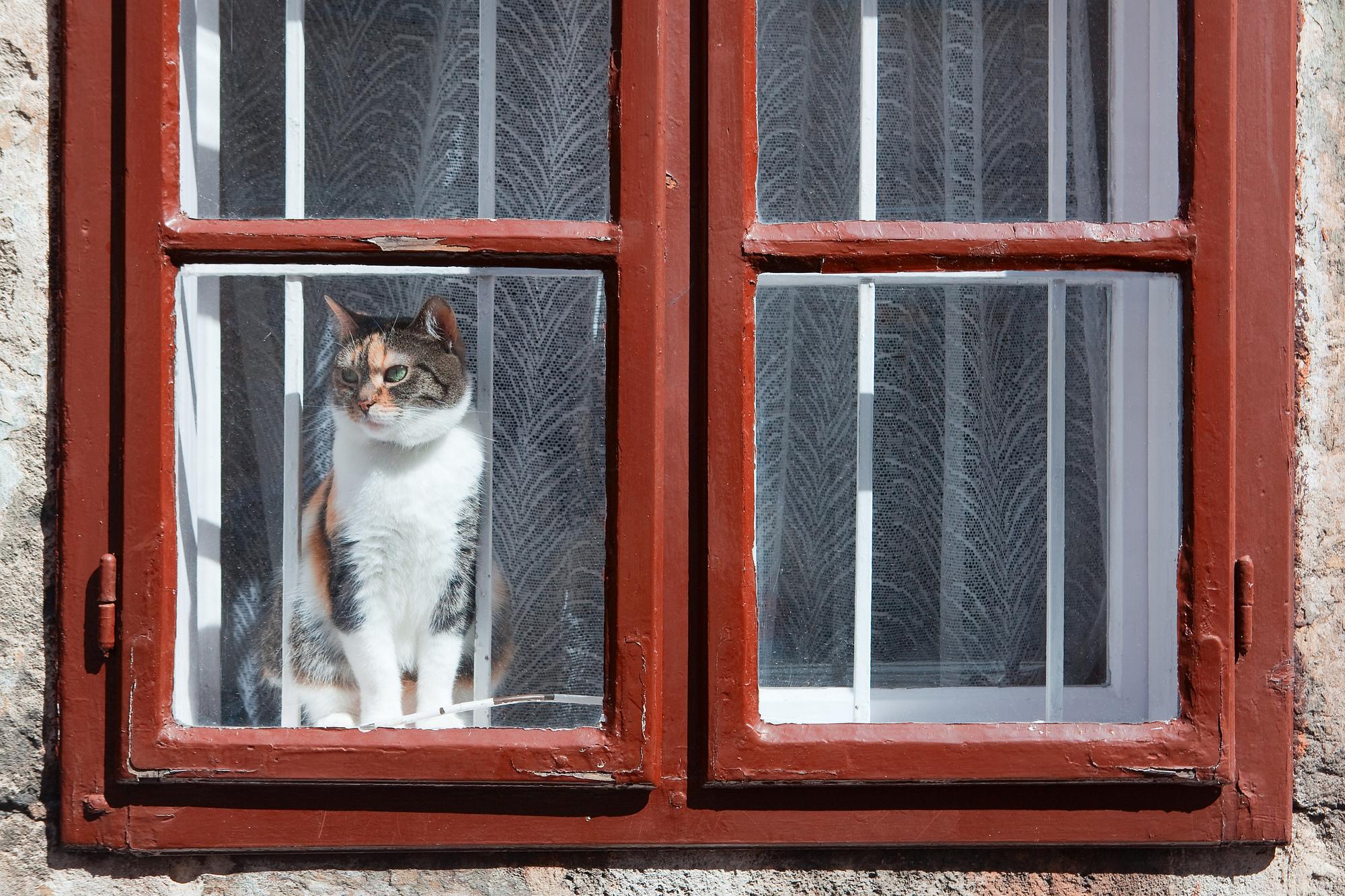 猫 留守番 ストレス