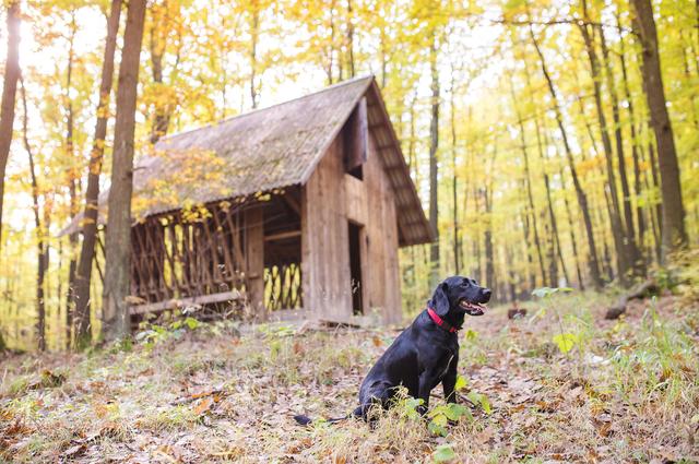 犬 キャンプ