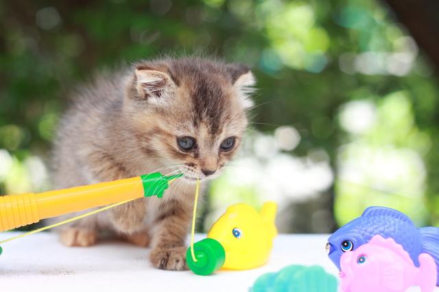 猫 おもちゃ ランキング