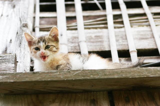 猫 威嚇 噛みつき