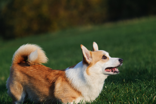 英語 しつけ 犬