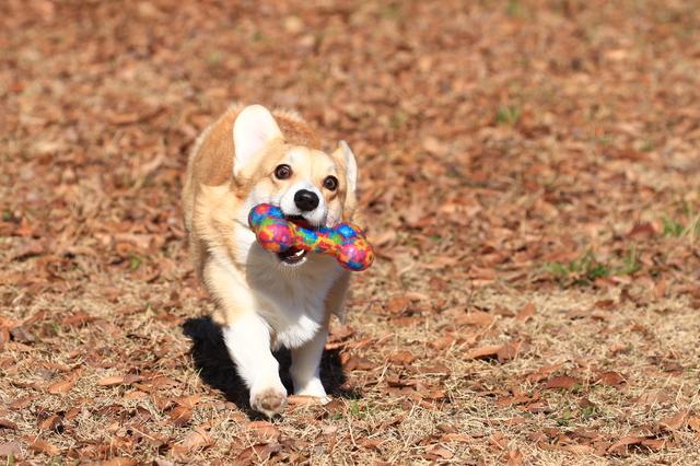 犬 震災 ストレス