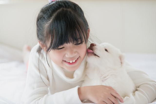 asian girl lying with white siberian husky puppy on bed