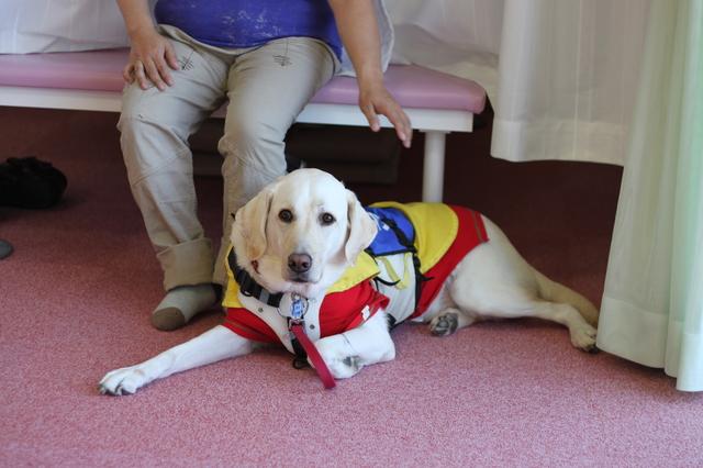 介助犬 マナー 盲導犬
