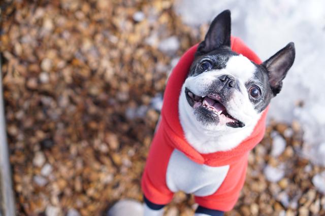 冬 犬 散歩
