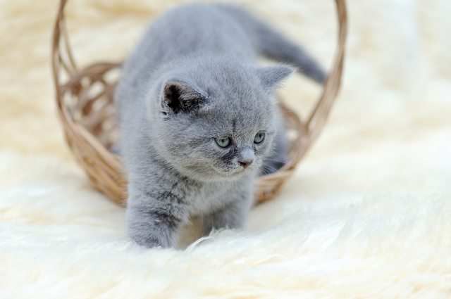 Little kitten sitting in the basket