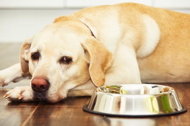 犬 腎不全