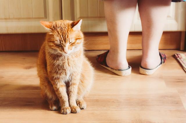 猫 ご飯 手作り