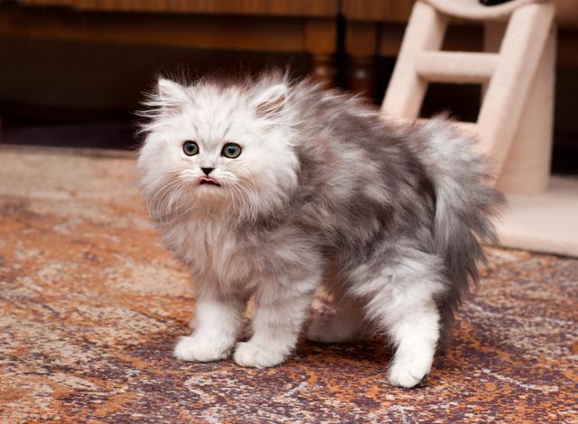 猫 換毛期 対策