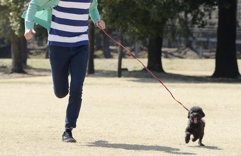 犬 ジョギング