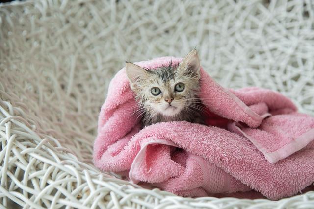 soggy kitten after a bath
