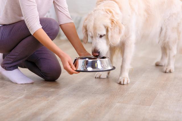 Caring woman feeding the dog