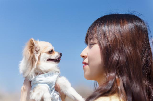 犬 目 見つめ合う