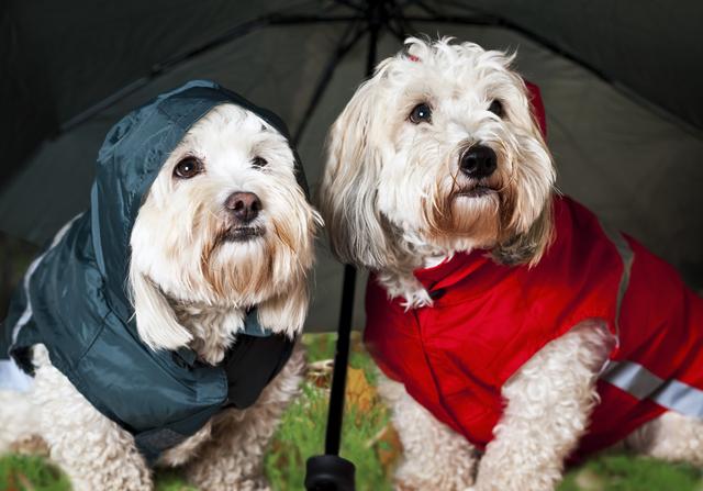 梅雨 犬 散歩