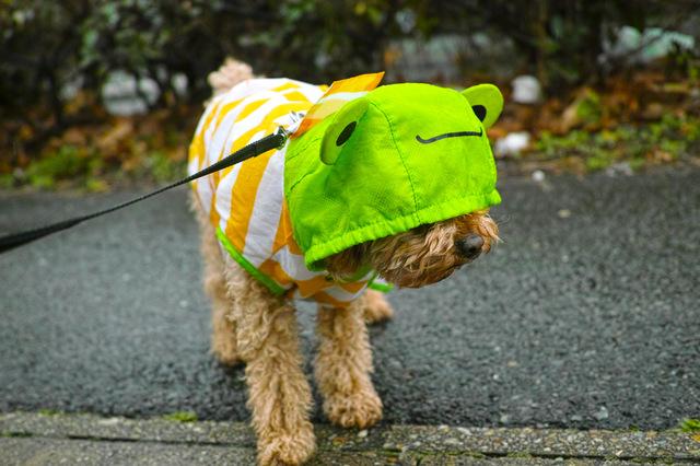 犬 雨 散歩