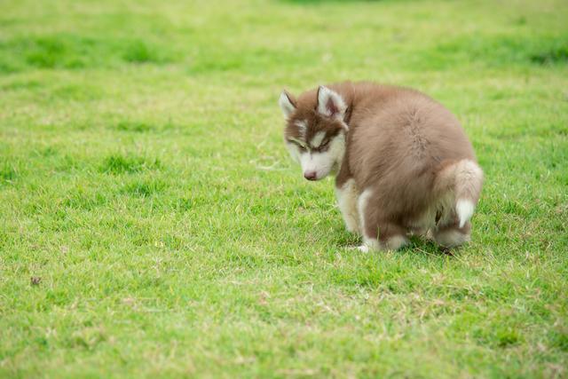 犬 迷子対策