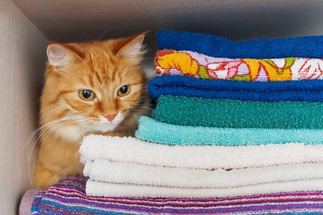 Cute ginger cat hides in a pile of towels. Fluffy pet with wary
