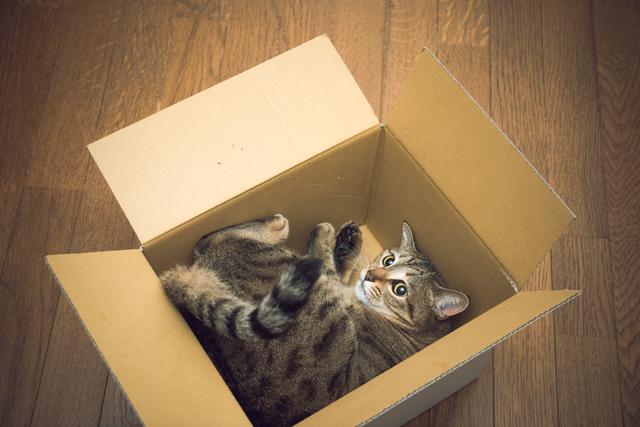 猫 箱に入る 理由