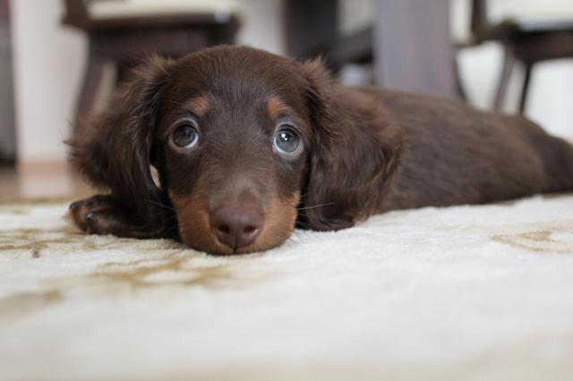 犬 口内炎 治療