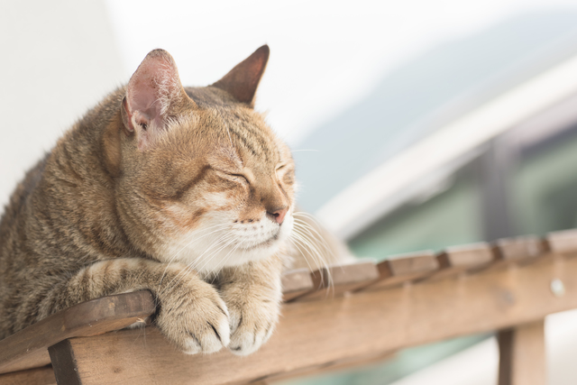 猫 梅雨 温度設定