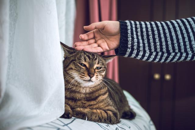 猫 リラックス