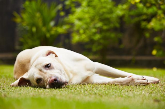 犬 熱中症 対処