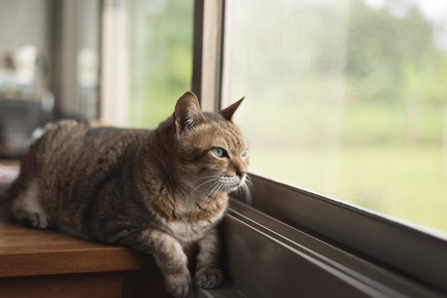 猫 瓜実条虫症 症状