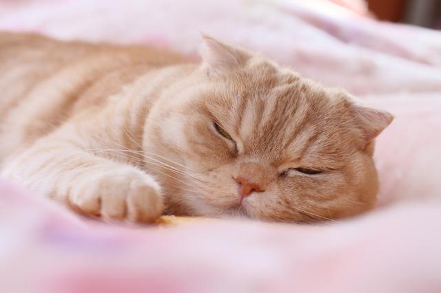 猫 梅雨 眠くなる理由
