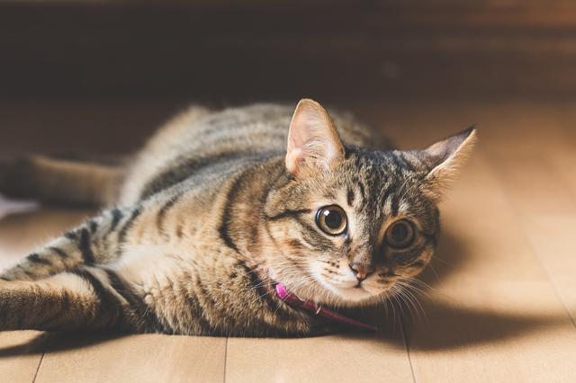 猫 嘔吐 原因