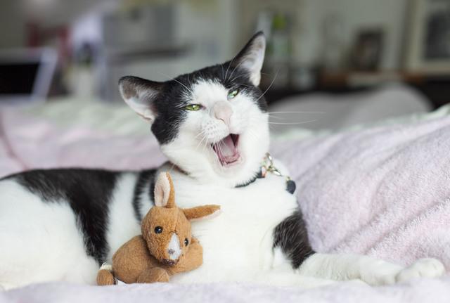 猫 フレーメン反応