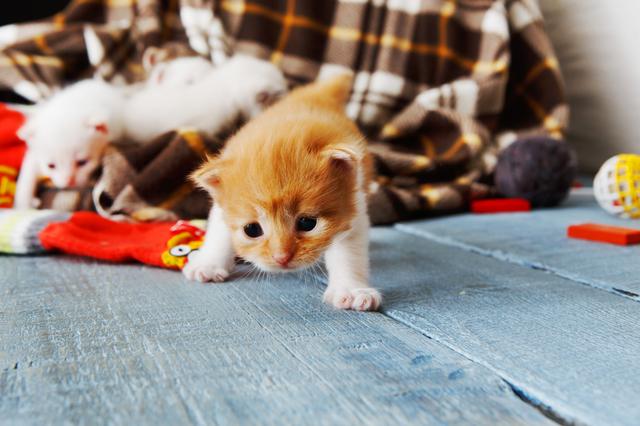 新生期 猫
